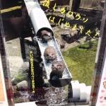 ( ・×・)市川市動植物園で「流しカワウソ」見てきたよ