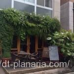 ( ・×・)渋谷の裏路地の緑に囲まれた素敵なカフェでランチ