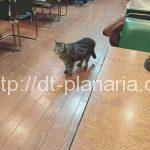 ( ・×・)看板猫と一緒にモーニングが食べられ喫茶店「白鳥」三ノ輪