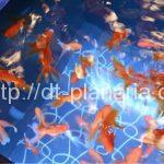 ( ・×・)金魚だらけの空間で金魚鉢ソーダはいかが?「すみだ水族館」お江戸の金魚ワンダーランド